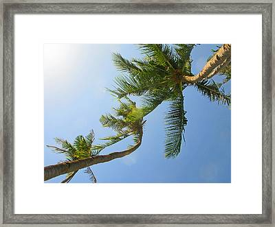 Look Up Framed Print by Pete Marchetto