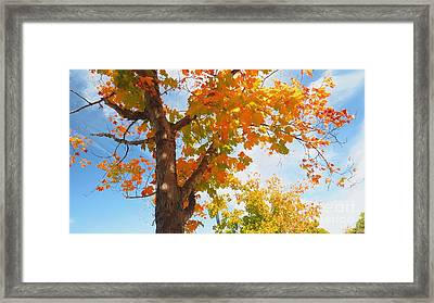 Look Up Framed Print by Scott Cameron