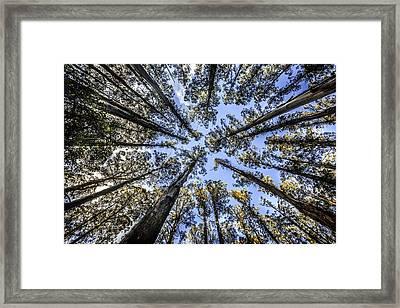 Look Up Framed Print