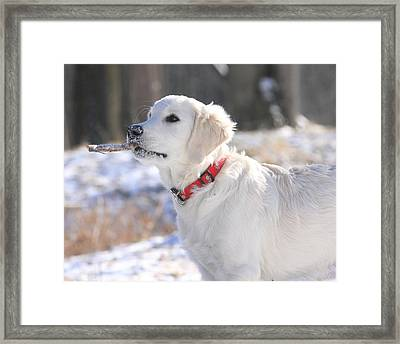 Look What I Found Framed Print by Coby Cooper
