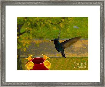 Look What We Have Here Framed Print by Al Bourassa