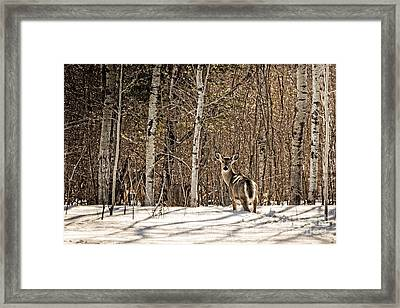 Lookin Back Framed Print