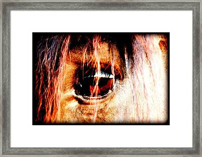 Lookin Right Back At You Framed Print by Kathy Sampson
