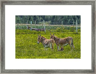 Looking After Junior Framed Print