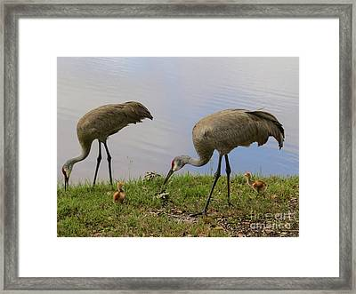 Looking Around Framed Print by Zina Stromberg