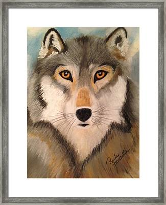 Looking At A Timber Wolf Framed Print