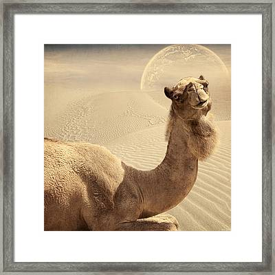 Looking At Ya Framed Print