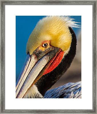 Looking At You Framed Print by Dale Nelson