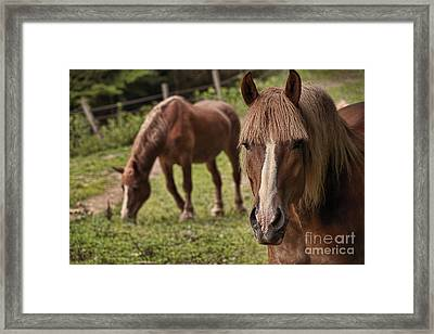 Looking At You Framed Print by Dan Friend