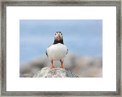 Looking At You Framed Print by Daniel Behm