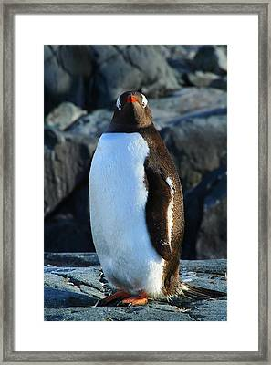 Looking At You Framed Print by FireFlux Studios