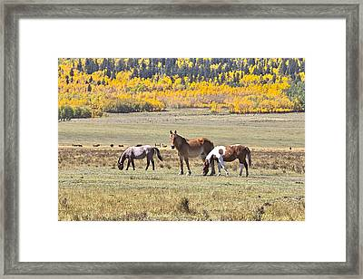 Framed Print featuring the photograph Looking At You by James Steele