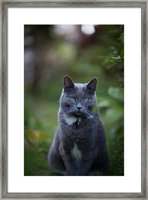 Looking Away Framed Print by Mike Reid