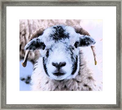 Looking B Ewe Tiful Framed Print by Sandra Cockayne
