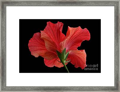 Framed Print featuring the photograph Looking Back by Judy Whitton