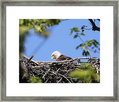 Looking Down.  Framed Print