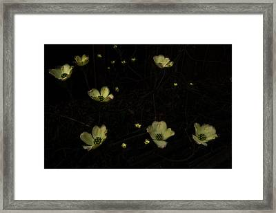 Looking Down Into Dogwood Framed Print by William Fields