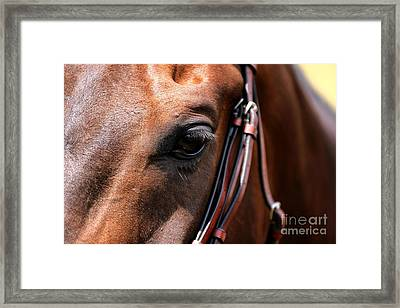 Looking Down Framed Print