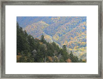 Looking Down On Autumn From The Top Of Smoky Mountains Framed Print by Dan Sproul