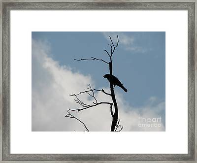Framed Print featuring the photograph Looking Down On Me  by Michael Krek