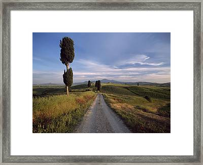 Looking Down Track Lined With Cypress Framed Print