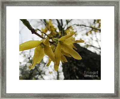 Looking Down Upon You Framed Print