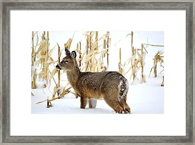 Looking For A Bite To Eat Framed Print