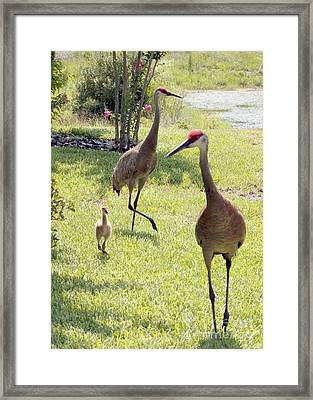 Looking For A Handout Framed Print by Carol Groenen