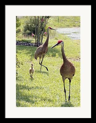 Backyard Animals Framed Prints