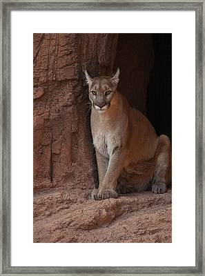 Looking For A Meal Framed Print by Daniel Hebard