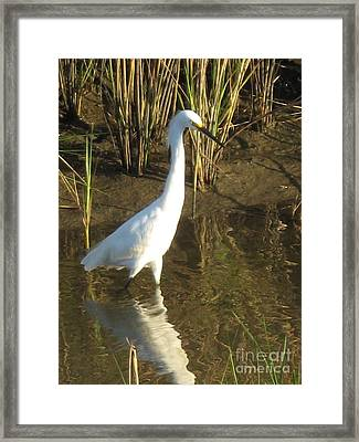 Framed Print featuring the photograph One Step At A  Time by John Glass