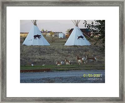 Looking For Bucks Framed Print by Jeff Pickett