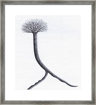 Looking For Fertile Land Framed Print