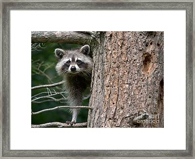 Looking For Food Framed Print by Cheryl Baxter