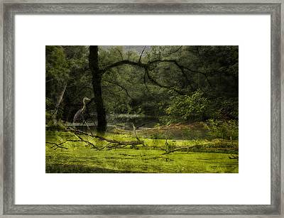 Looking For Food Merged Image Framed Print by Thomas Woolworth