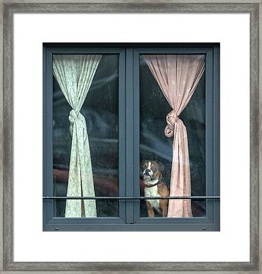 Looking For His Buddy Framed Print by Jef Van Den