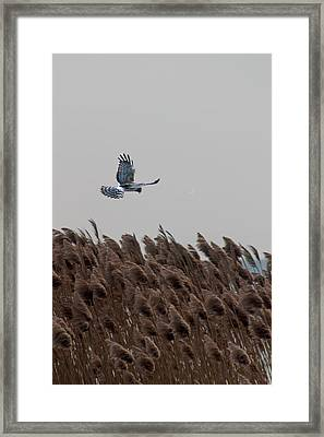 Looking For Lunch Framed Print by Rhonda Humphreys