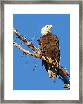 Looking For Lunch Framed Print by Susan Rolle