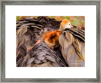 Looking For Mother's Warmth Framed Print
