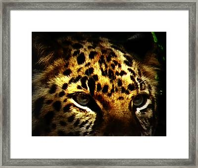 Looking For Prey Framed Print