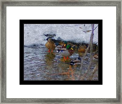 Looking For Shelter From The Storm Framed Print by Rosemarie E Seppala