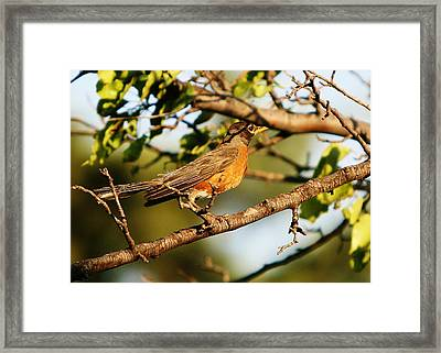 Framed Print featuring the photograph Looking For Spring by Shirley Heier