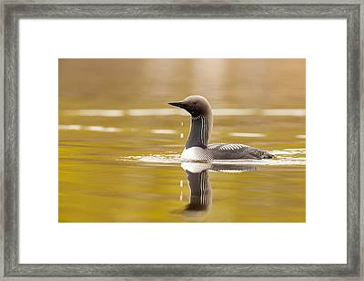 Looking For The Intruder Framed Print