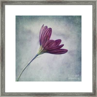 Looking For You Framed Print by Priska Wettstein