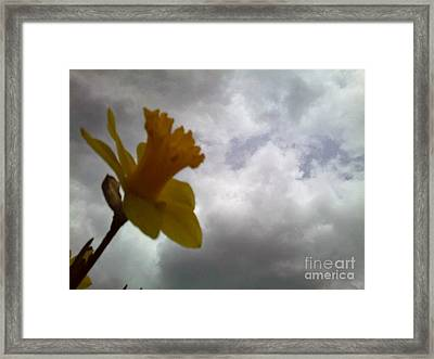 Looking Forward Framed Print by Thommy McCorkle