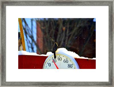 Looking Forward To Warmer Days Framed Print