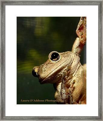 Looking In Framed Print