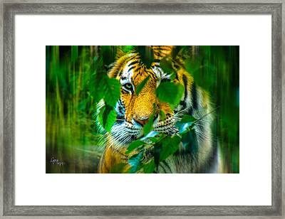 Looking Into My Soul Framed Print