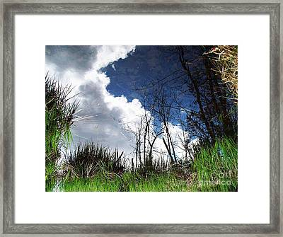 Framed Print featuring the photograph Looking Into The Bog by Joy Nichols