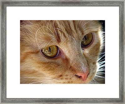 Looking Love In The Eye Framed Print by Chris Gudger
